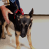 Security dog keeps campus safe, happy