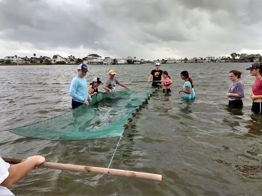 With storm clouds brewing behind them, students in the water compared muddy and sandy ecosystems by dragging nets through the water to examine the species that inhabited the area, including stingrays and jellyfish.