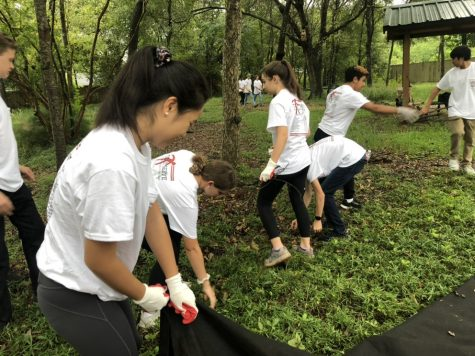 The Turville and Hegeman advisories weeded and covered invasive plants at the Don Green Nature Park.