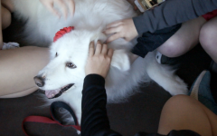 Video: therapy dogs provide students with stress relief