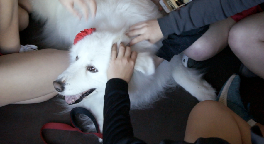 On Dec. 11, therapy dogs visited students in the Chao room to provide stress relief in preparation for upcoming finals.